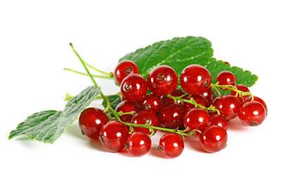 Красная смородина – лечебные и полезные свойства