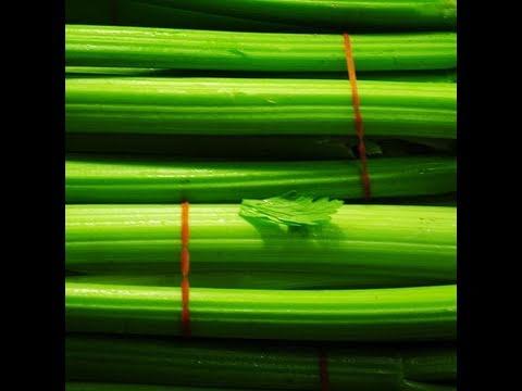 Сельдерей – польза, вред и способы заготовки
